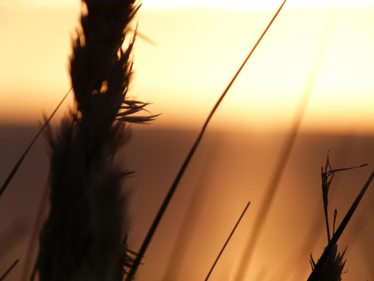 Ter Heijde zonsondergang